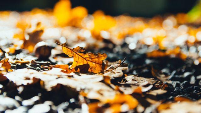 生分解される落ち葉