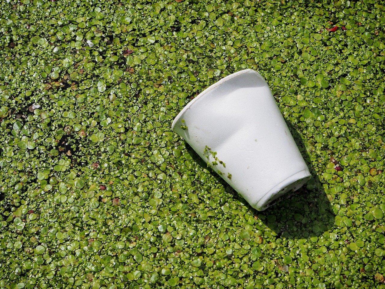 土に還るプラスチックカップ